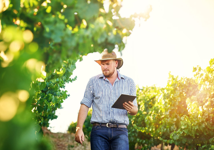 Collecting Data in Vineyard
